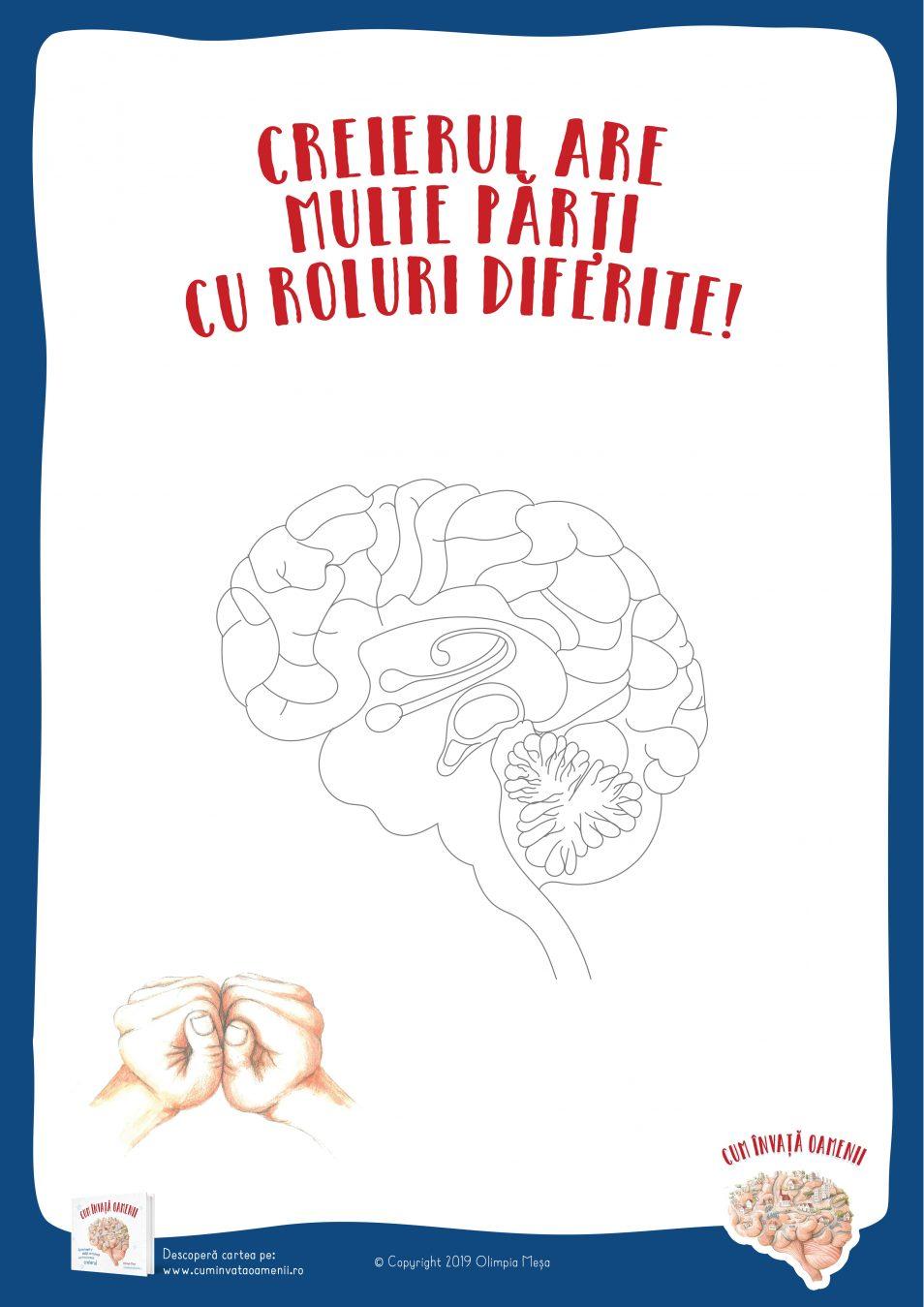 Poster: Creierul are multe parti cu roluri diferite!